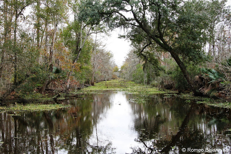 Louisiana Swamps and Bayous New Orleans Swamp Tour