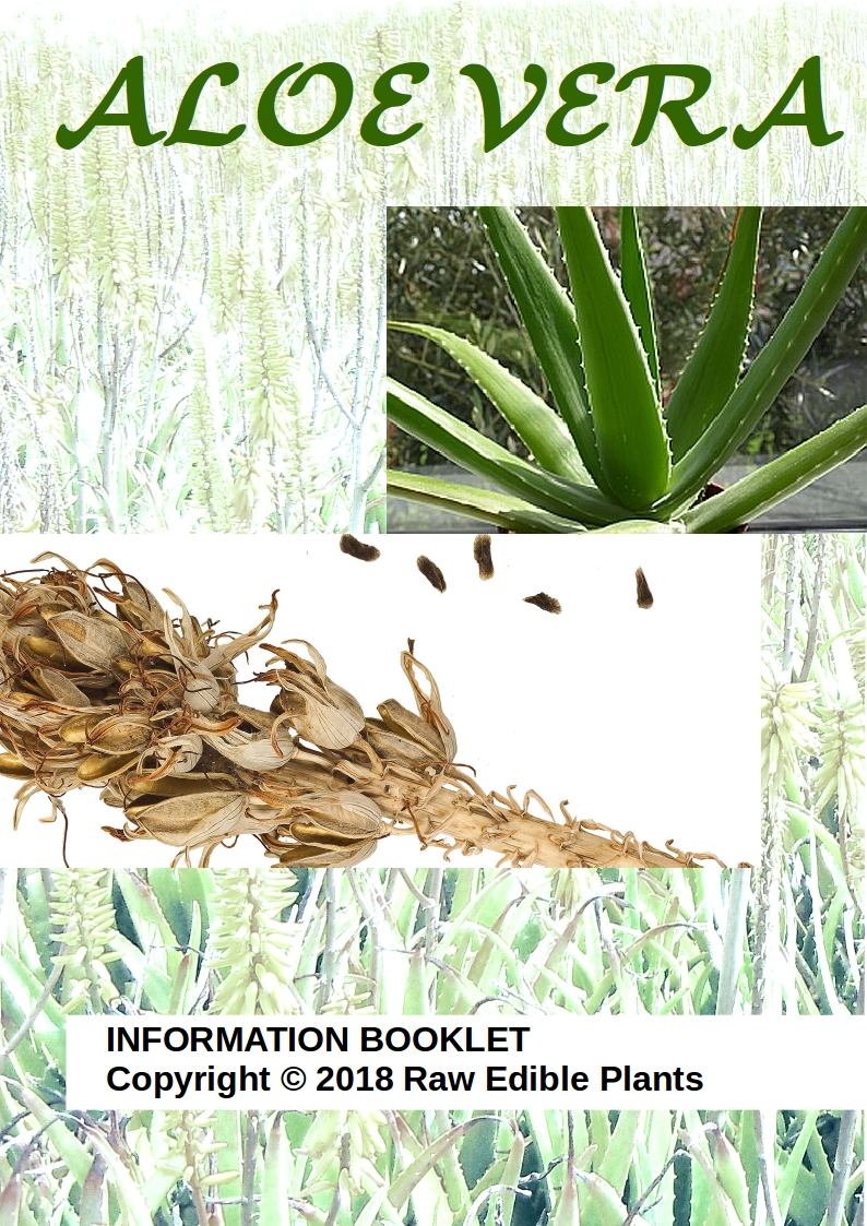 Raw Edible Plants Aloe Vera