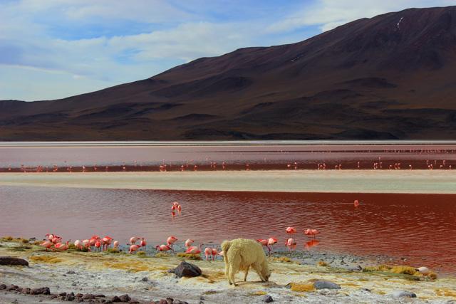 La Laguna Colorada, la 'joya' rubí del recorrido por el suroeste de Bolivia