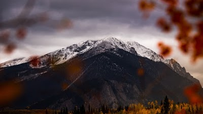 Forest in Autumn. Snow on Mountain