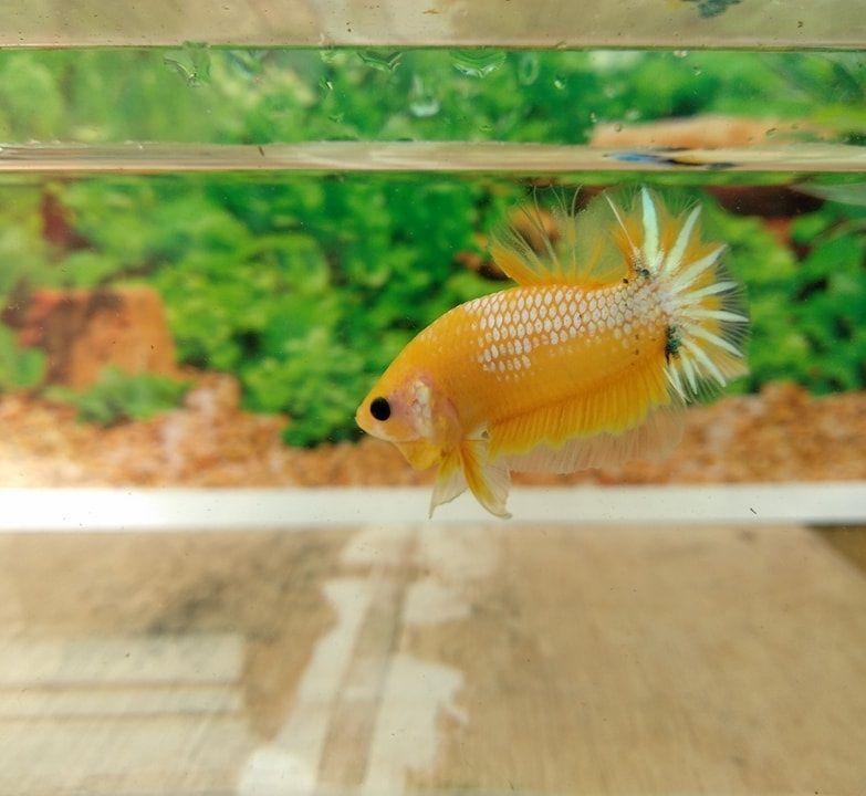 Image Best Betta Fish Tank Help