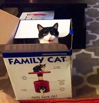 gato-caja-casa