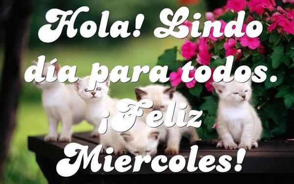 feliz miércoles gatitos
