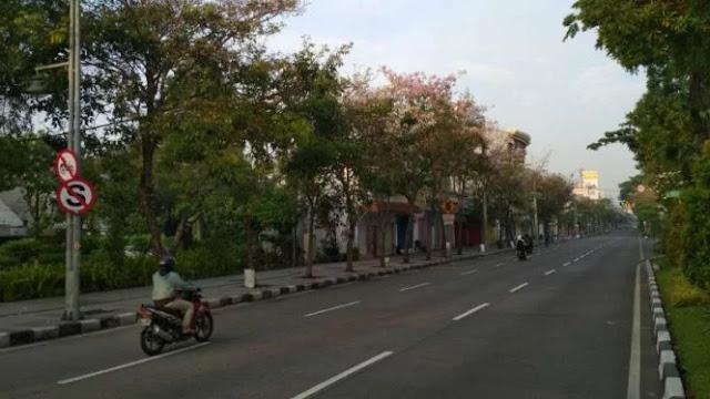 Tabebuya Pink Bersemi di Kota Surabaya yang Serasa Seperti di Jepang