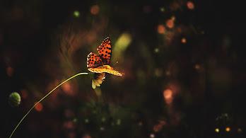 Butterfly, 4K, 3840x2160, #49
