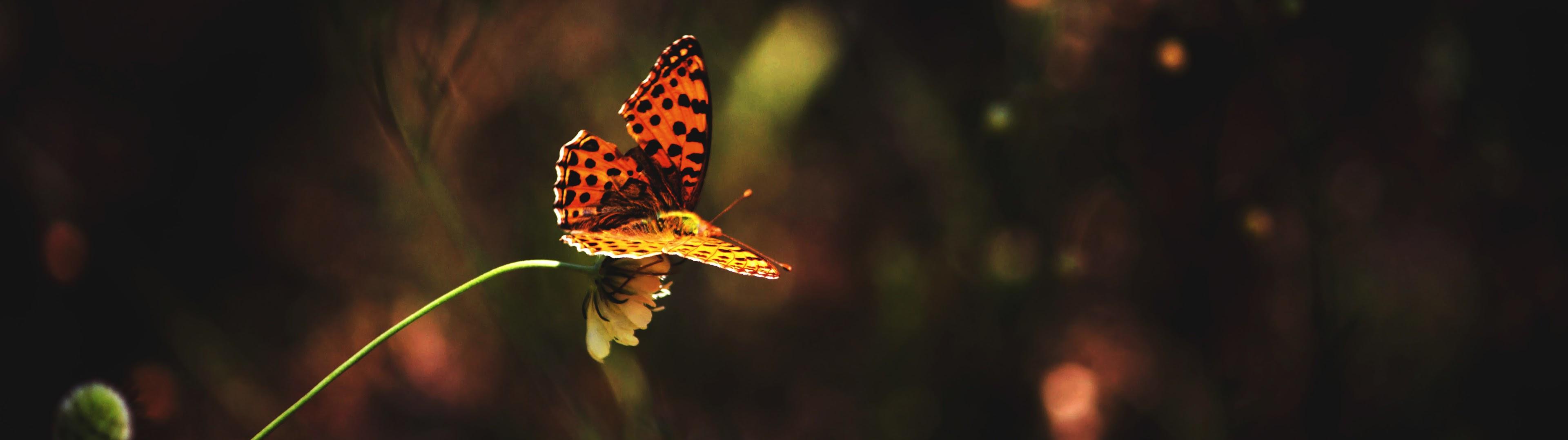 Butterfly 4k Wallpaper 49