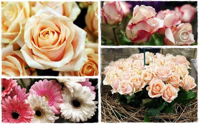 Gartenblog Topfgartenwelt Eröffnung Gartencenter Dehner Salzburg: frische Blumen, Floristik