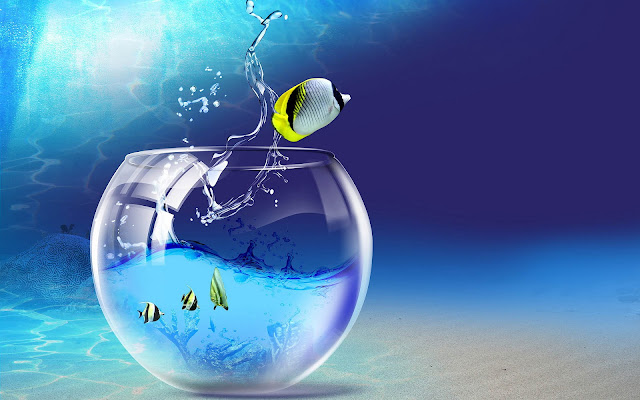 3D vissenkom in de zee