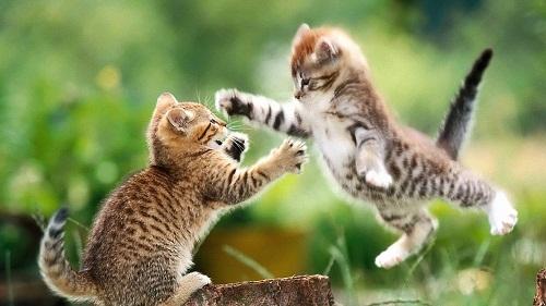 Cute Cat Pictures for Desktop