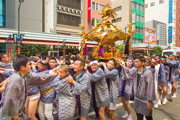 Bearing a golden mikoshi shrine, Sanja Matsuri 2016 in Asakusa, Tokyo, Japan.