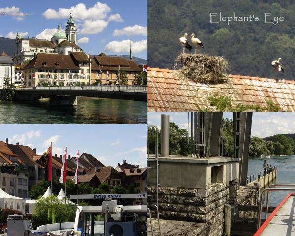 Solothurn, storks in Altreu Büren an der Aare, passing thru the lock