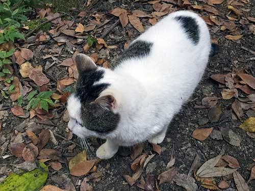稲荷山の猫01