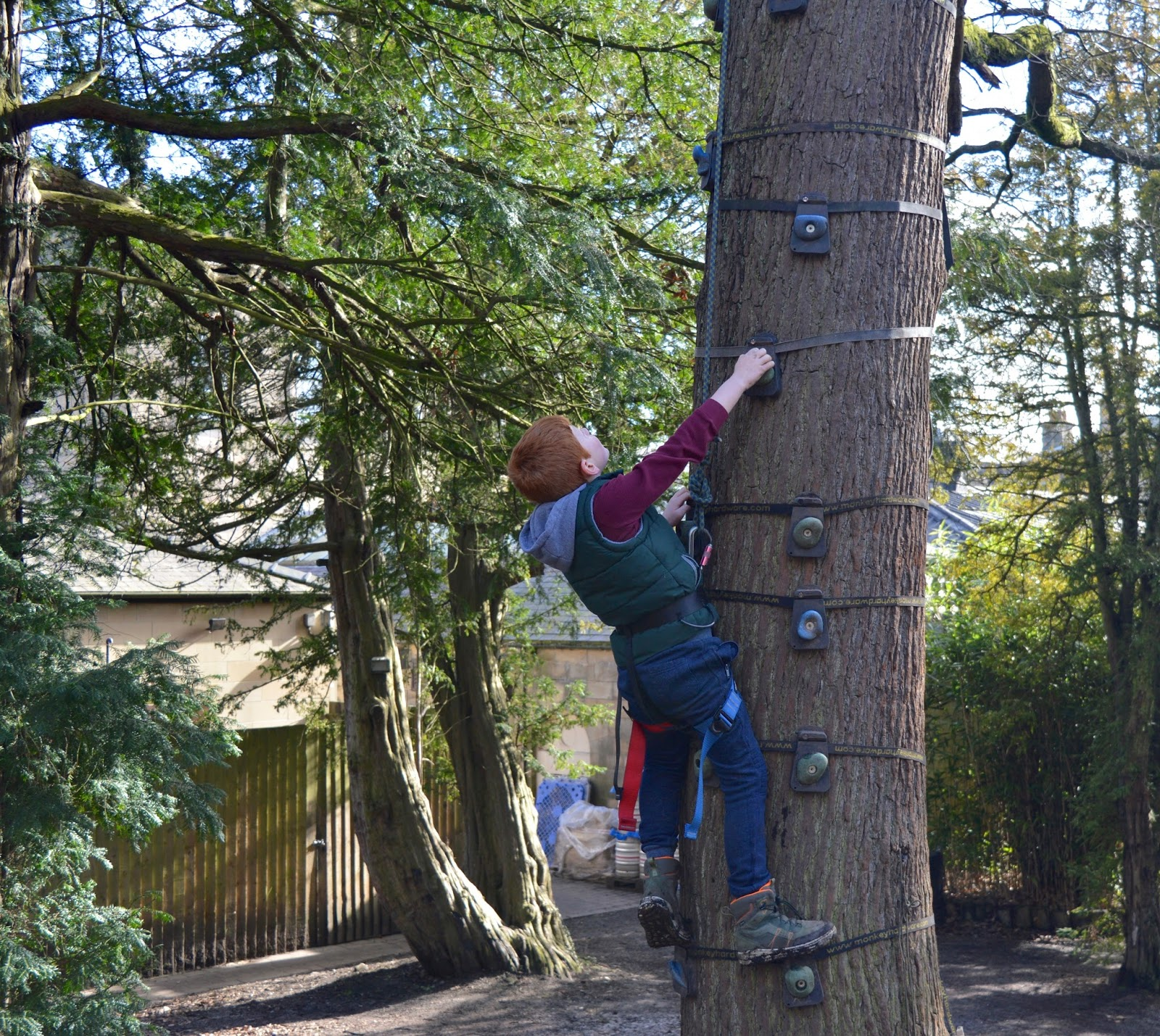 Beamish Wild | School Holiday Club & Activities in County Durham | North East England - tree creeper