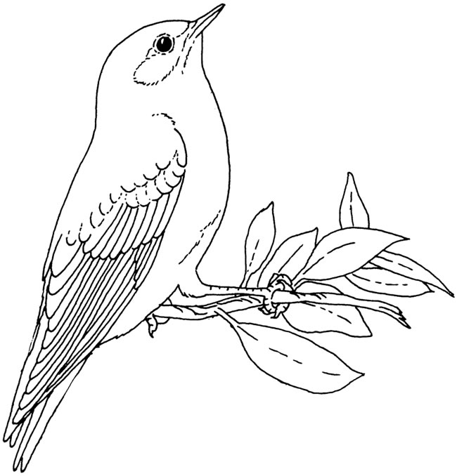 Pigeon Coloring Page To Print Out: Inkspired Musings: School's Out