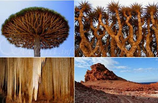 La extraña Isla de Socotra.