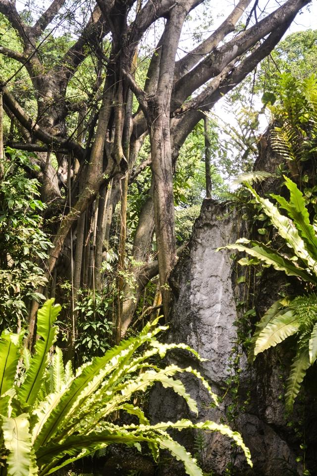 Zoo, Ragunan, Kebun Binatang di Jakarta Selatan, Forest, hutan
