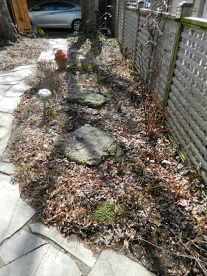 Leslieville Toronto Spring Back Yard Cleanup Before by Paul Jung Gardening Services--a Toronto Gardening Company