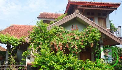 Bunga Melati Belanda di rumah MANGYONO.com
