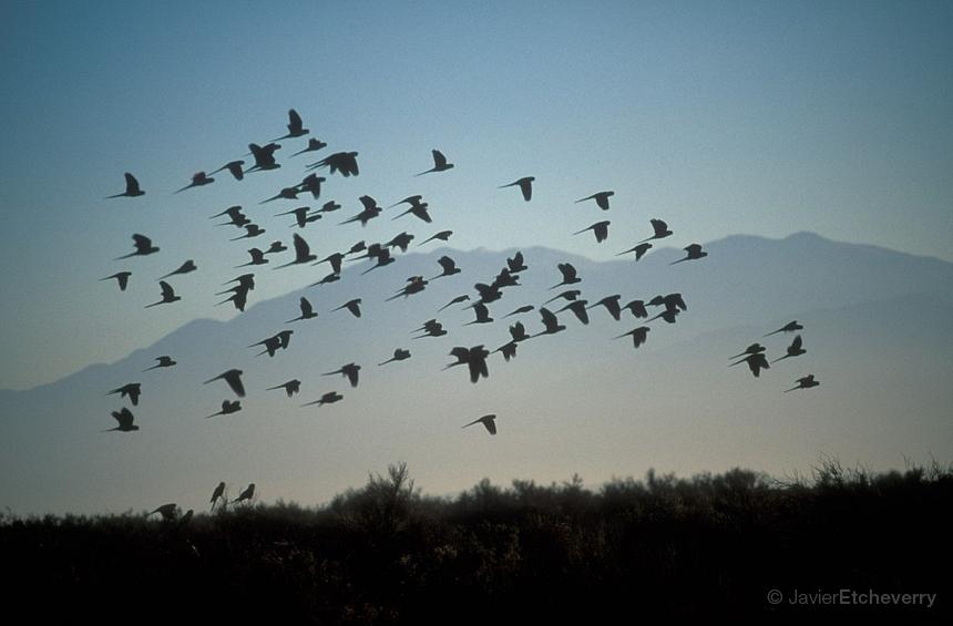 Betty's Blog  Flock