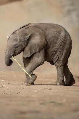 Imagen elefante bebe