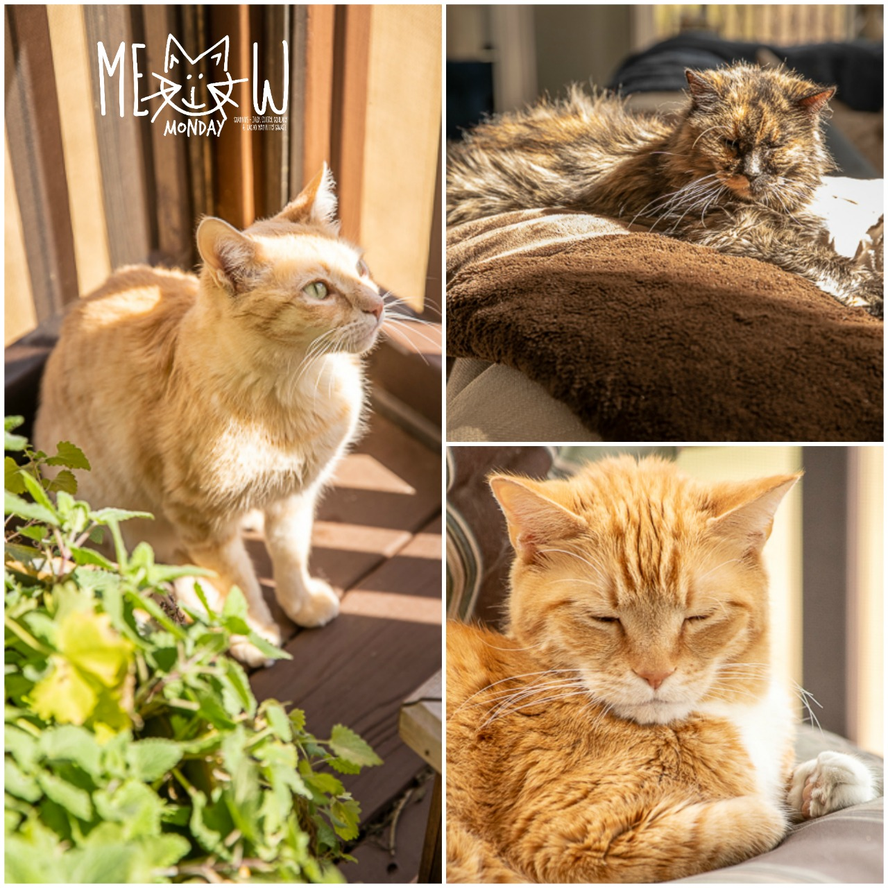 Pictures of three cats