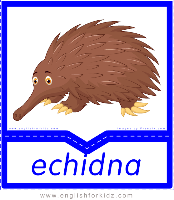 Echidna - printable Australian animals flashcards for English learners