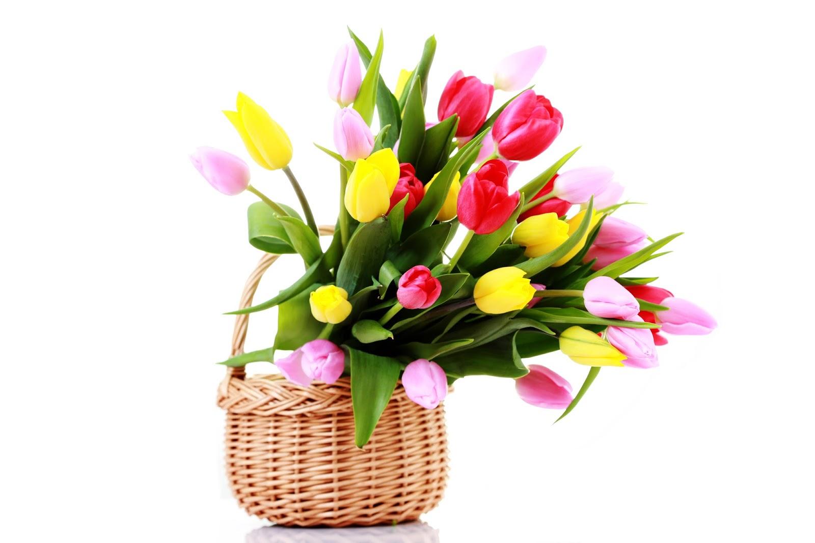 BANCO DE IMÁGENES: 20 Fotos Gratis De Rosas, Tulipanes Y