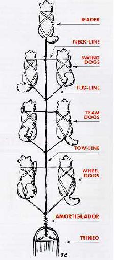 Situación y Distribución Perros en Trineo Mushing