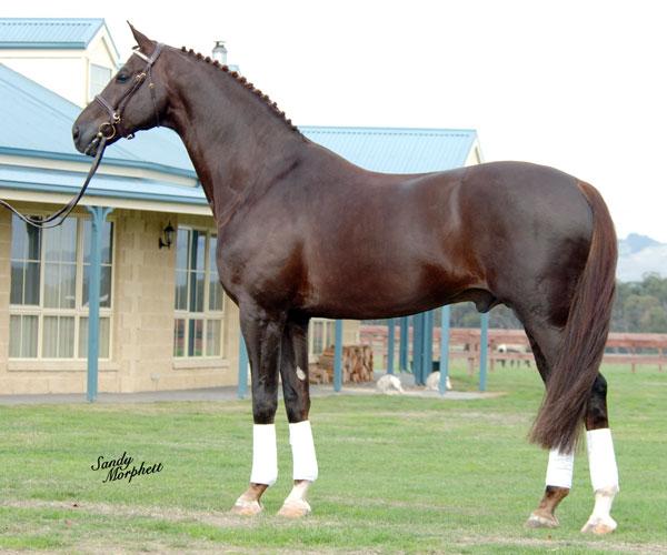 Pure Ponies: Horse Colours Part II - photo#39