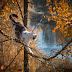 Μία χαριτωμένη γατούλα!...