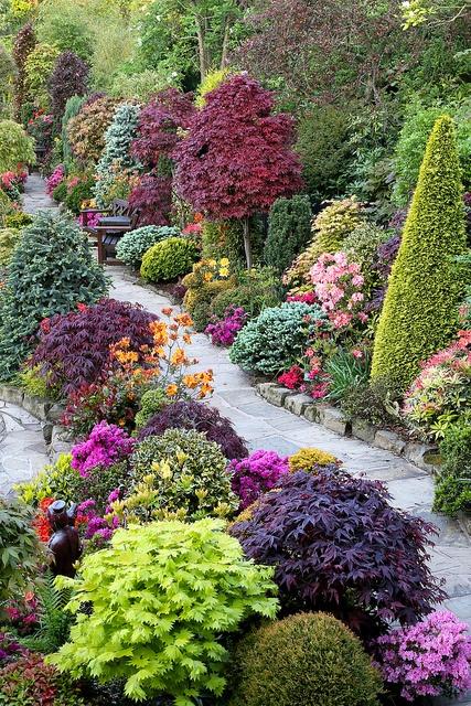 Backyard Pretty Garden: Beautiful Combination Of Shrubs, Trees & Flowers
