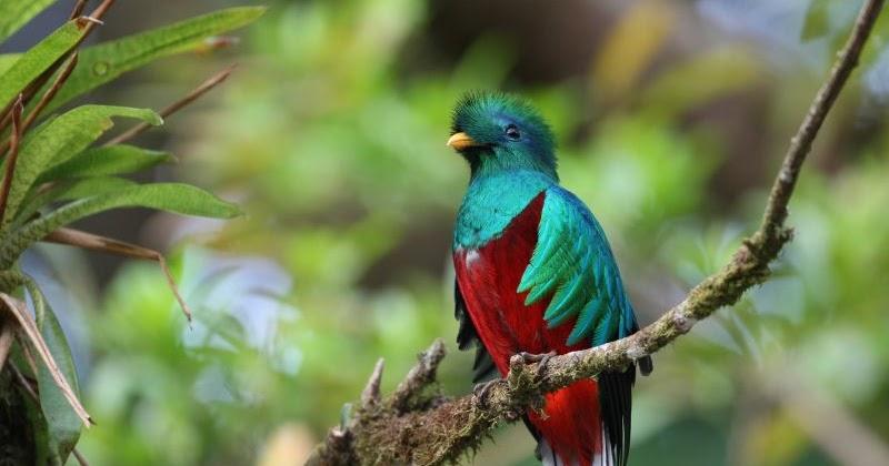 Poemas De Amor Poema Al Quetzal