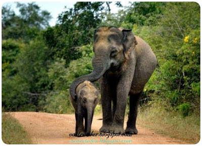 Once there lived an ant and an elephant. They were close friends and one day, they were playing the game hide and seek. Now the first chance was for the ant to search the elephant and the ant saw the elephants under the tree.