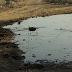 انفجار خط مياه الشرب بالفيوم يغرق الأراضي