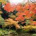 【京都】心亂難纏秋之南禪