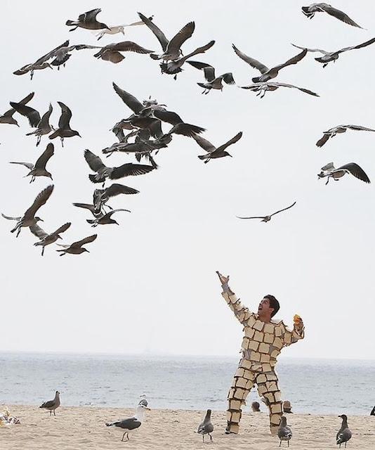 O senhor das gaivotas