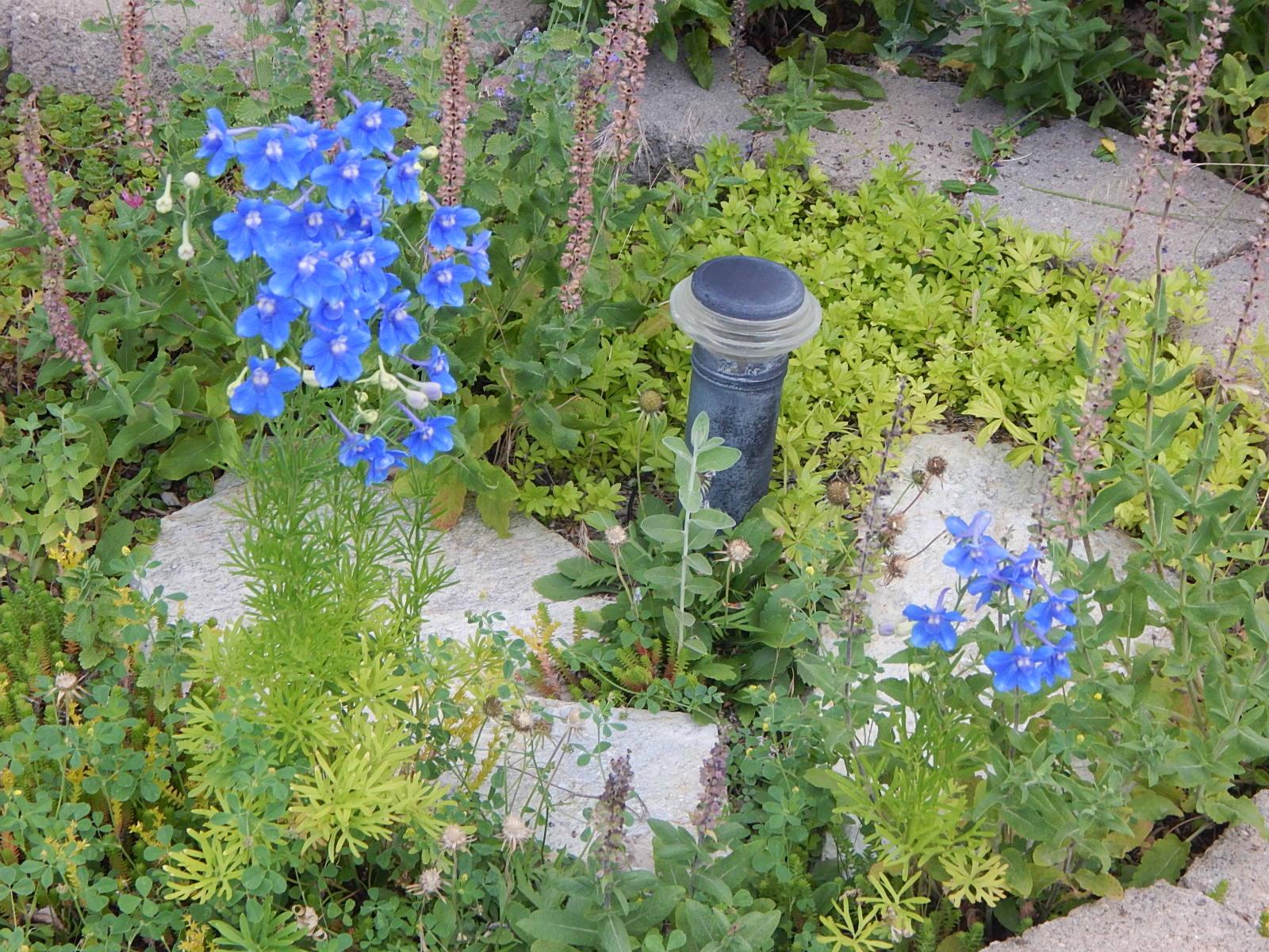 Idaho Pugranch Flower Friday Happy Birthday