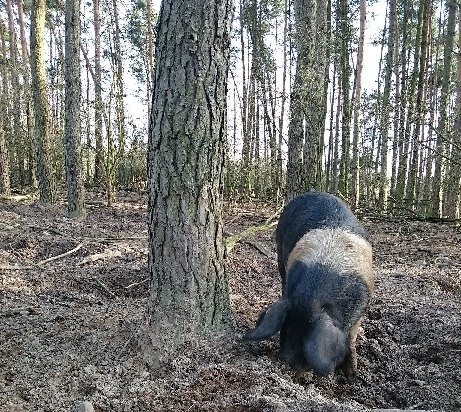 Wildpferde- und Haustierpark Liebenthal
