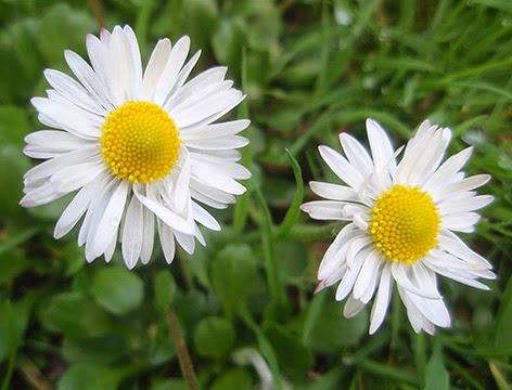 Flores Silvestres De Color Blanco 3
