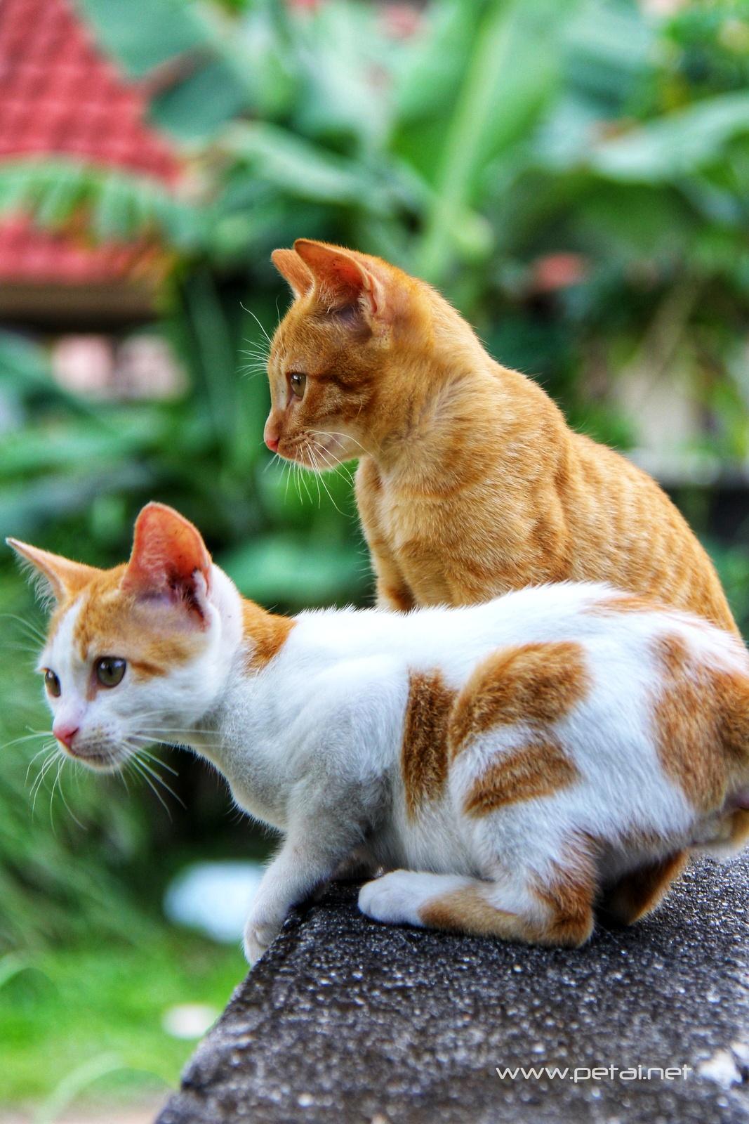 Mengenang Kucing Kesayangan Kami Opet & Oyen 2
