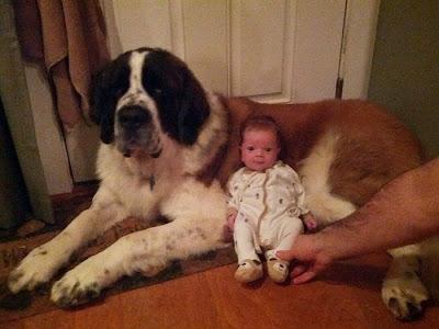 bebe con su perro gigante
