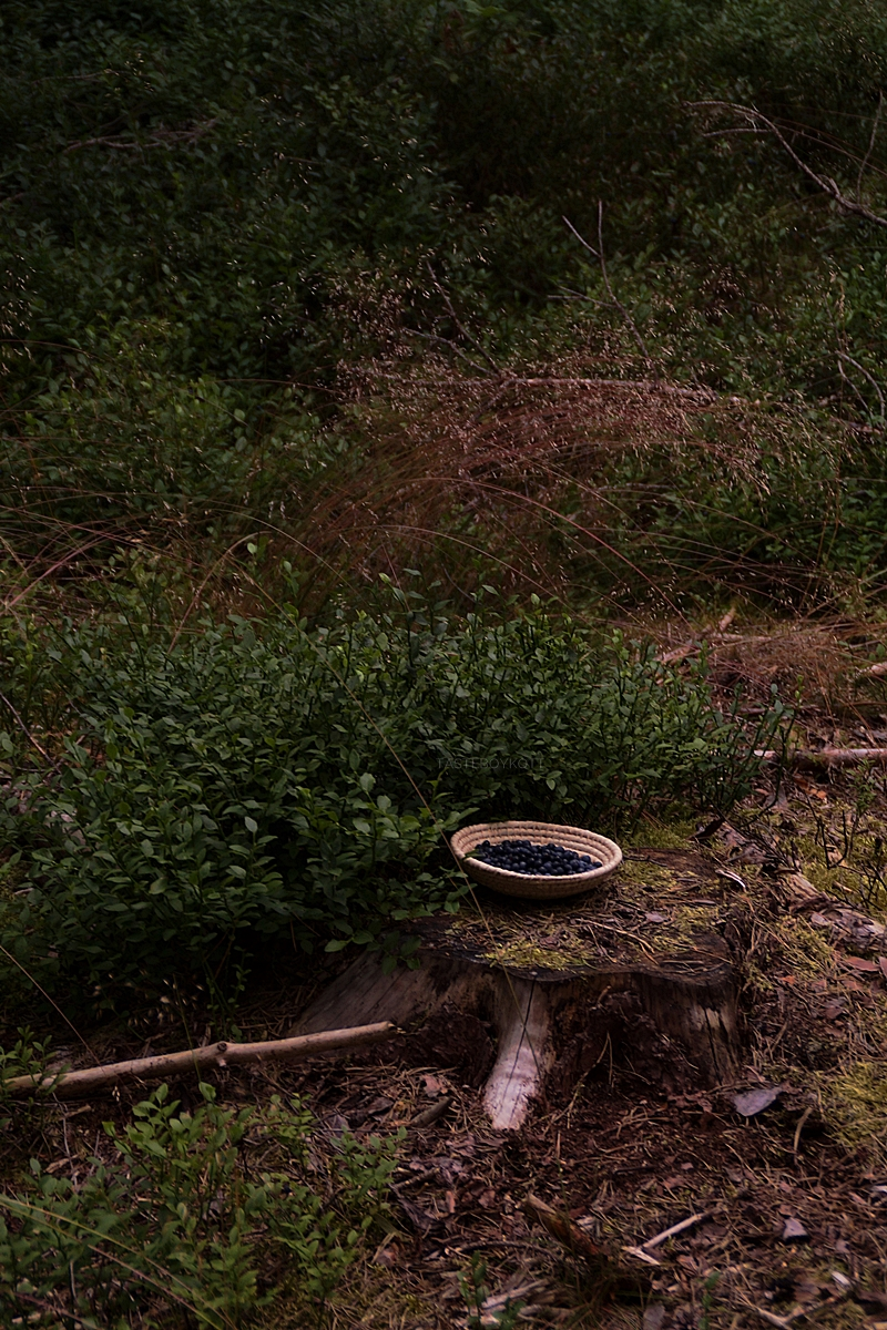 Picking blueberries in the forest - dark and moody photography // Heidelbeeren pflücken im Wald Fotostory