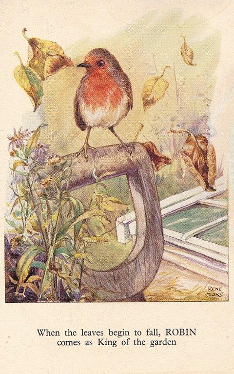 Rene Cloke Postcard Robin