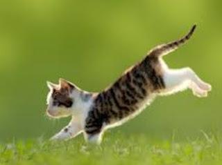 Arti Mimpi Dikejar Kucing