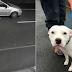 Εγκατέλειψε τον σκύλο του στον δρόμο λίγο πριν τα Χριστούγεννα