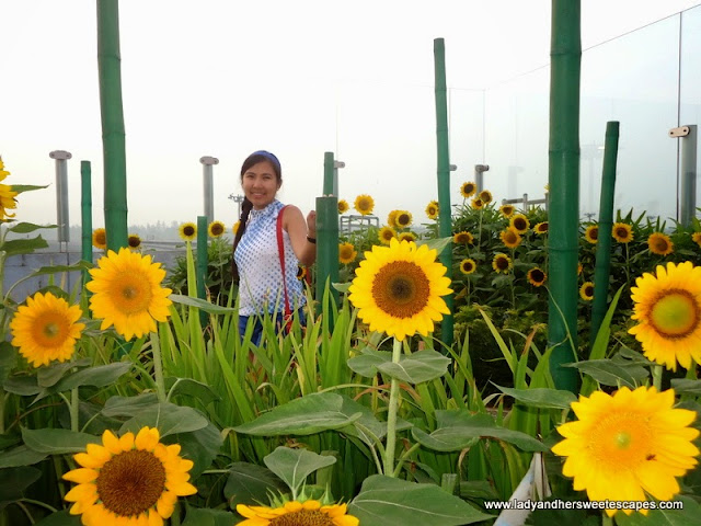 Lady in Sunflower Garden, Changi Airport Singapore