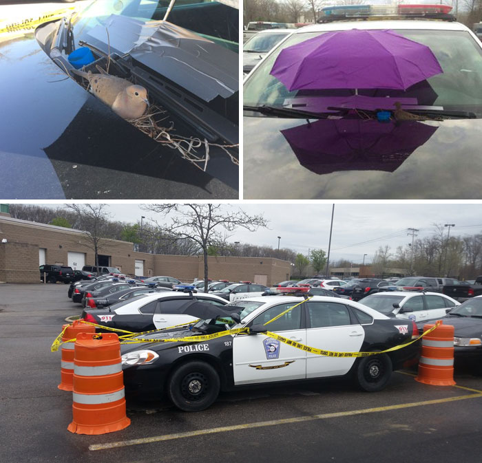 40 Times 2016 Restored Our Faith In Humanity - Bird Builds Her Nest On Police Car, The Cops Attach An Umbrella To The Windshield To Keep Her Safe From The Elements And Tape Off The Parking Spot So Nobody Bothers Her
