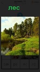 берег речки на котором расположен лес с тропинкой
