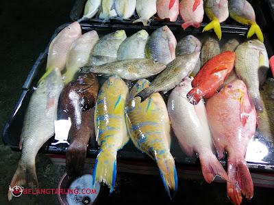 Ikan Unik Sabah