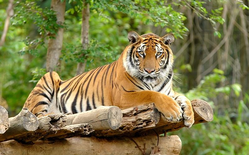 400+ Nama Dan Gambar Fauna Indonesia Bagian Tengah Terbaik